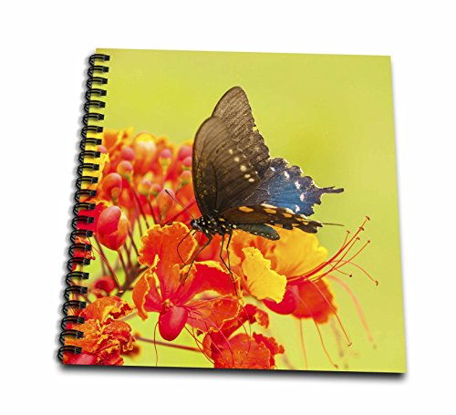 3dRose Danita Delimont - Butterflies - USA, Texas, Hidalgo County. Pipevine swallowtail butterfly on flower. - Drawing Book 8 x 8 inch (Hidalgo Flower)