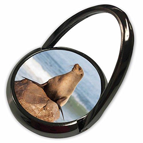 3dRose Danita Delimont - Seals - Cape Fur Seal, Cape Cross Seal Reserve, Skeleton Coast, Namibia. - Phone Ring (phr_208510_1) (Reserve Skeleton)