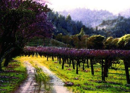 Amazon com: New Visions Art Mall 14x20 Poster Napa Valley