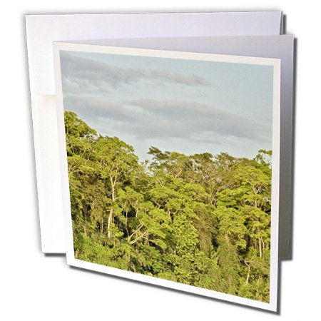 KIKE CALVO Rainforest Costa Rica Collection - Tortuguero National Park - 1 Greeting Card with envelope (gc_234120_5) (Tortuguero National Park)