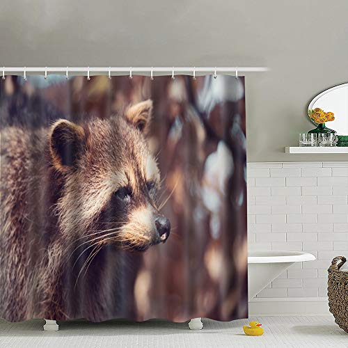 best bags Portrait Raccoon Procyon Lotor Known North Animals Wildlife America Nature Shower Curtain Set, Relaxing Summer Landscape Bathroom Decor,Shower Curtain Set Waterproof 60X72 Inch