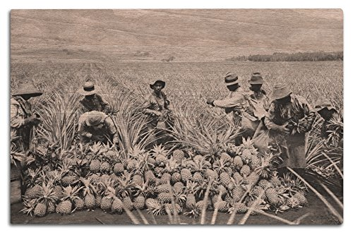 Pineapple Plantation in Hawaii - Vintage Photograph (12x18 Wood Wall Sign, Wall Decor Ready to (Plantation Pineapple Wall)