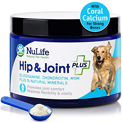 Advanced Hip and Joint Supplement for Dogs for Arthritis Pain Relief & Hip Dysplasia, Supports Joint Health & Reduces Inflammation with Glucosamine, Chondroitin, MSM & Coral Calcium, 6oz Powder