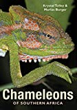 Chameleons of Southern Africa