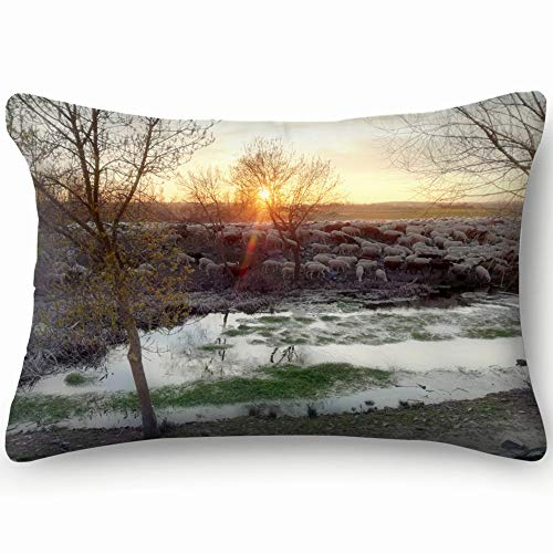 best bags Sunset Countryside Ruminant Domestic Mammalia Ovine Animals Wildlife Agrarian Pillowcases Decorative Pillow Covers Soft and Cozy, Standard Size 14