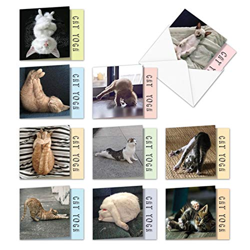 (Cat Yoga - Box of 10 Cute Greeting Cards with Envelopes (4 x 5.12 Inch) - Bulk Blank Feline, Kitten, Pet All-Occasion Note Cards - Funny Assortment of Animal Notecards MQ4952OCB-B1x10)
