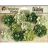 Petaloo Darjeeling Teastained Dahlia Flowers, Green, 10-Pack