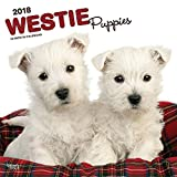 West Highland White Terrier Puppies 2018 12 x 12 Inch Monthly Square Wall Calendar, Animals Dog Breeds Terrier Puppies (Multilingual Edition)
