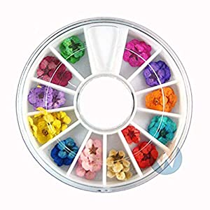 Gotian Art Accessories Real Dry Dried Flowers 12 Colors Bundle Set in Wheel - Dried Fower Decorations - 12 Different Patterns and Colors in Separate Chamber of Wheel Box (Approx. 5mm to 7mm) 66