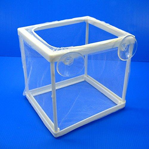 ISTA Separation Box net for Aquarium sick injured aggressive newly born fish by Aquarium Equip