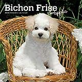 Bichon Frise Puppies 2020 7 x 7 Inch Monthly Mini
