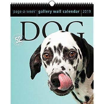 9061cbdd5af71 Amazon.com   Dog Page-A-Week Gallery Wall Calendar 2019  10