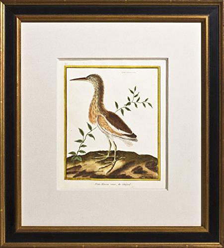 Plate 315: Petit Heron roux, du Senegal