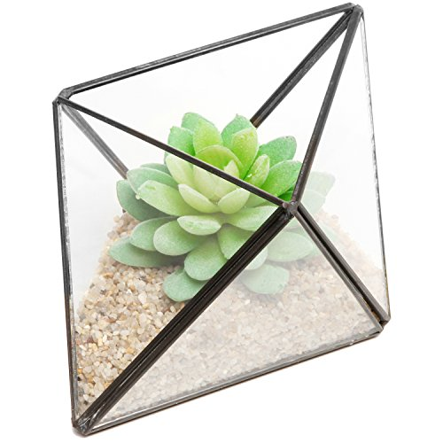 (Modern Diamond Design Clear Faceted Succulent Air Plant Planter Box Pot/Keepsake Display Bowl - MyGift)