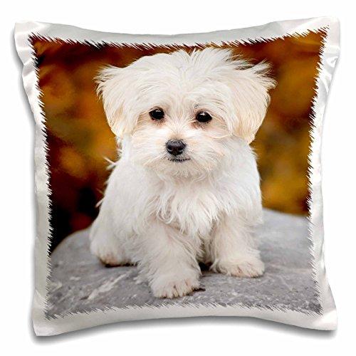 3D Rose Maltese Cute Little Puppy Pillow Case, 16