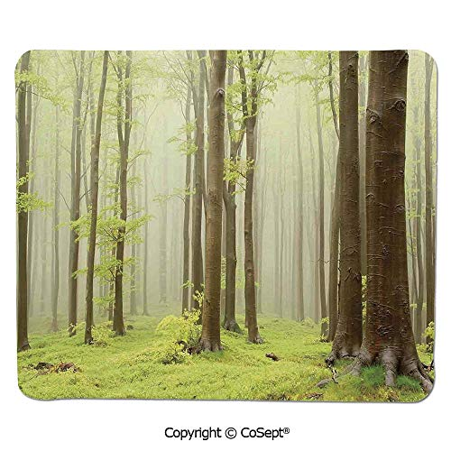 Mouse Pad,Misty Spring Beech Forest Photo Taken in