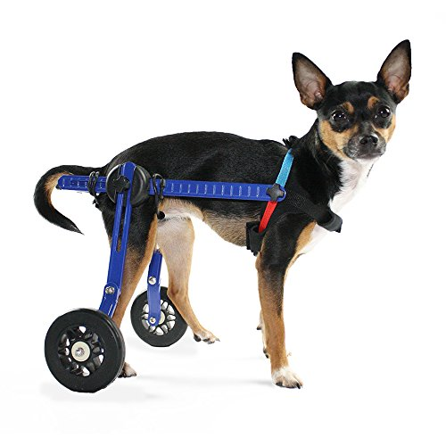 Dog Wheelchair: Extra Small For Mini/Toy Breeds up to 10 lbs - Veterinarian Approved - Wheelchair for Back Legs - By Walkin' Wheels