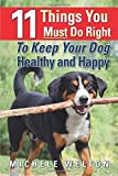 11 Things You Must Do Right To Keep Your Dog