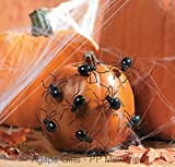 "FE-OTC Halloween Pumpkin Decoration Push Pin 2"" Spiders 12pk"