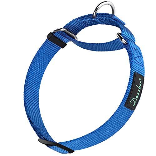 Dazzber Martingale Collar, Medium, Royal Blue, Neck 13