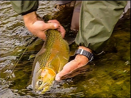 Expert anglers the best amazon price in savemoney fishing the best trout river in the world fandeluxe Choice Image