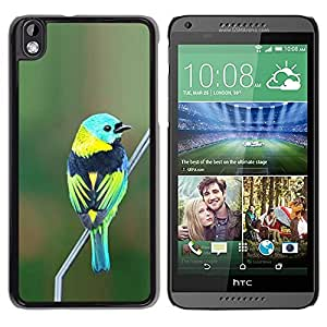 "Snap-on Series Teléfono Carcasa Funda Case Caso para HTC DESIRE 816 , ( Blue Bird Verde Naturaleza Rama trullo"" )"
