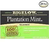 Bigelow Plantation Mint Tea, 20-Count Boxes (Pack of 24)