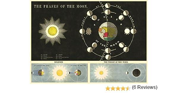 Cavallini Fases de la luna Papel de regalo: Amazon.es: Hogar