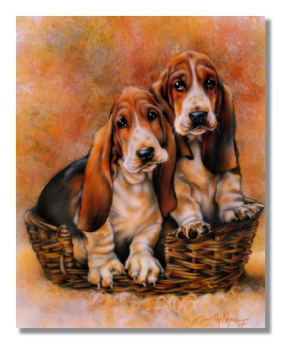 Baby Basset Hound Puppy Dog Animal Wall Picture 16x20 Art Print
