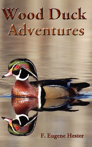 Wood Duck Adventures