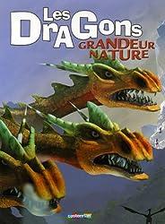 Les Dragons grandeur nature