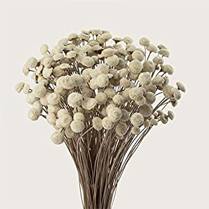 """90 Stems Dry Flowers Brazilian Import Small Spilanthes Flower Dried Acmella Oleracea Decorative Mini Dry Bouquet for Wedding Floral Arrangements, 18"""" -20"""" Tall Home Decorations (White) 6"""