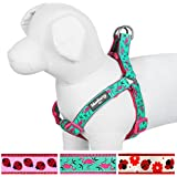 Blueberry Pet 3/4-Inch No Pull Step-In Harness for Dog, Medium, Pink Flamingo on Light Emerald