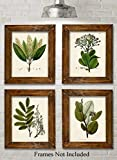 Green Botanical Illustrations - Set of Four Prints (8x10) Unframed - Great Kitchen Decor and Gift...