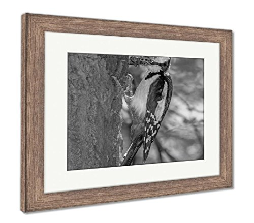 (Ashley Framed Prints Woodpecker On Tree with Prey in Its Beak, Wall Art Home Decoration, Black/White, 34x40 (Frame Size), Rustic Barn Wood Frame, AG5138605)