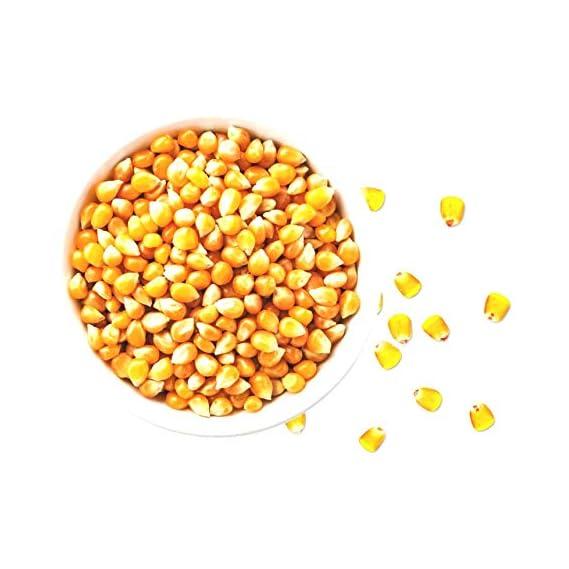 Marwar Natural Popcorn Kernels (Ready to Cook, Unpopped, Original Makkai Seeds) (1 Kg)
