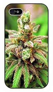 iPhone 4 / 4s Weed and dope - Green beauty - black plastic case / Verses, Inspirational and Motivational