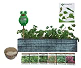 Cedar Wood Planter Box - Complete Mini Herb Garden Kit - Indoor Garden Seeds Growing Kit - Grow Cooking Herbs Basil, Chives, Thyme, Oregano, Parsley & Cilantro - Choice of 2 Colors