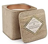 Paddywax Woods Collection Scented Soy Wax Candle in Mango Wood, 12-Ounce, Eucalyptus & Sandlewood