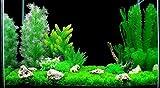 ZAZALUM Artificial Aquarium Plastic Plants - 17 Pack of Premium Quality Emulational Underwater Grass Aquatic Plant Ornament, Assorted Color/Size Home DIY Decorations Set for Fish Tank
