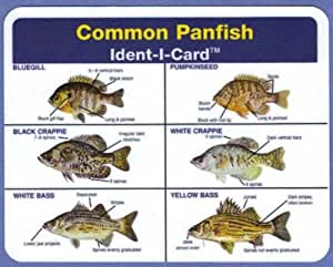 Common Panfish Ident I Card Freshwater Fish