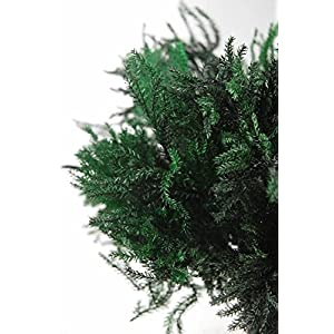 "Richland Preserved Green Pine Fern Bundle 10"" 110"