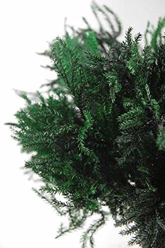 "Richland Preserved Green Pine Fern Bundle 10"""