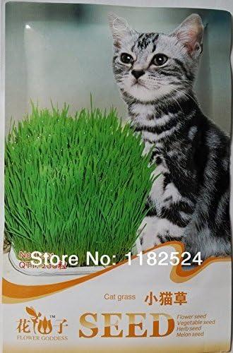 1 Pack 200 semillas Las semillas de la hierba del gato *: Amazon.es: Jardín