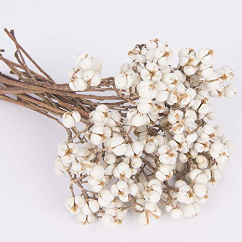 (Tallow Berries Dried,Natural Stem Wedding Floral Décor)