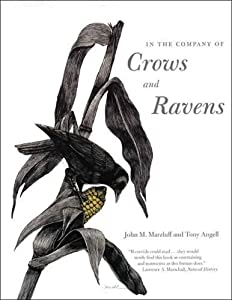 In the Company of Crows and Ravens by John M. Marzluff (Jun 5 2007)