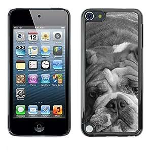 PC/Aluminum Funda Carcasa protectora para Apple iPod Touch 5 English Bulldog Gray Black White Dog / JUSTGO PHONE PROTECTOR