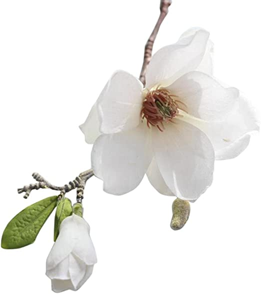 Amazon Com Artificial Magnolia Fake Silk Flower Single Floral
