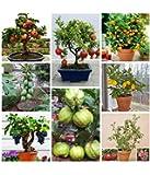 Creative Farmer Fruit Seeds Mega Combo (Apple, Orange, Lemon, Guava, Cherry, Grapes, Papaya, Pomegranate)-45 Different Seeds/Packet