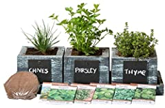 Herb Garden Planter by Planter